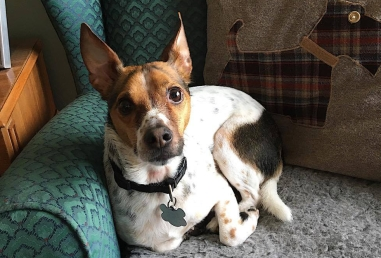 Oscar-Dog-Day-Care-Looe